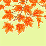 Maple leaves autumn theme vector Royalty Free Stock Photography