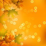 Maple Leaves of Autumn. Maple Leaves on a Warm Color Background of Autumn Royalty Free Stock Images