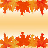 Maple leaves autumnal background Royalty Free Stock Photo