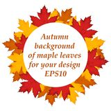 Maple leaves background. EPS10 Royalty Free Stock Photo