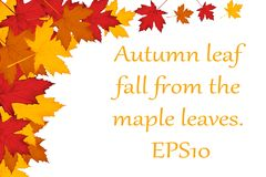 Maple leaves background. EPS10 Royalty Free Stock Photos