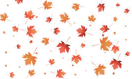 Maple leaves background. Falling autumn leaves banner template.  Royalty Free Stock Photography
