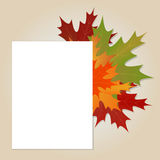 Maple leaves background Stock Photography