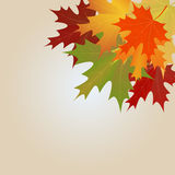 Maple leaves background Royalty Free Stock Photography