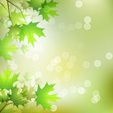 Maple Leaves Background. Vector Leaves on the Branches in front of a Blurred Background with Bokeh Royalty Free Stock Image