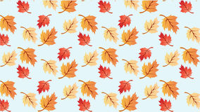 Maple Leaves Background Wallpaper Royalty Free Stock Photography