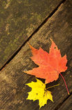 Maple leaves on bench Royalty Free Stock Images