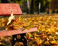 Maple leaves on a bench in the park. Autumn Landscape Royalty Free Stock Photo