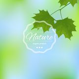 Maple leaves on a blurred background Royalty Free Stock Images
