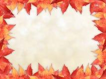 Maple leaves border Stock Image