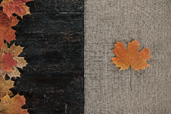 Maple leaves border Royalty Free Stock Image