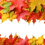 Maple leaves border with space for text. Colored autumn leafs isolated. Royalty Free Stock Images