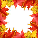 Maple leaves border with space for text. Colored autumn leafs isolated Stock Photos