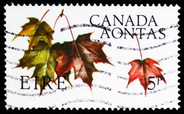 Maple Leaves, Canadian Centennial serie, circa 1967. MOSCOW, RUSSIA - FEBRUARY 21, 2019: A stamp printed in Ireland shows Maple Leaves, Canadian Centennial serie stock photography