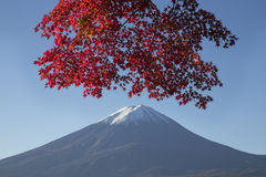 Maple leaves change to autumn color at Mt.Fuji, Japan Stock Image