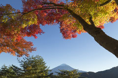 Maple leaves change to autumn color at Mt.Fuji, Japan Royalty Free Stock Images
