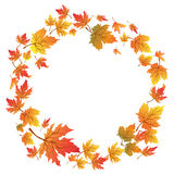 Maple leaves circle with copy space Stock Photos