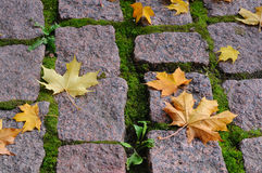 Maple leaves on cobblestones Royalty Free Stock Image