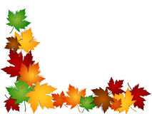 Maple leaves colorful border Stock Image