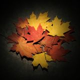 Maple leaves on concrete. Royalty Free Stock Images