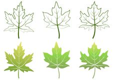 Maple Leaves and Contours. Maple Green Leaves and Contour Pictograms Isolated on White Background. Vector Royalty Free Stock Photo