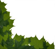 Maple leaves corner Royalty Free Stock Images
