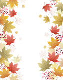 Maple leaves corner background Royalty Free Stock Photos