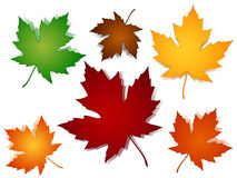 Maple leaves fall color options Stock Images