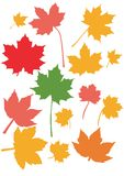 Maple leaves fall colors Stock Image
