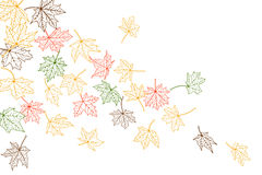 Maple leaves falling Royalty Free Stock Image