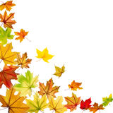 Maple leaves falling Royalty Free Stock Photos