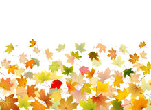 Maple leaves falling Stock Photos