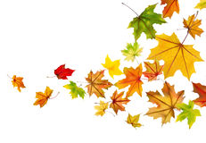 Maple leaves falling Royalty Free Stock Images