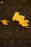Maple leaves on flag-stone pavement Royalty Free Stock Photography