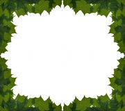 Maple leaves frame Royalty Free Stock Image