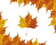 Maple leaves frame. Autumun frame of maple leaves royalty free illustration