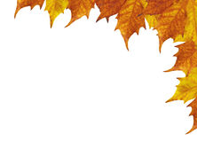 Maple leaves frame. Autumun frame of maple leaves Royalty Free Illustration