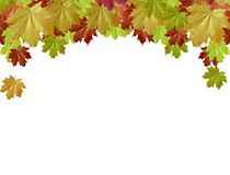 Maple leaves frame Stock Images