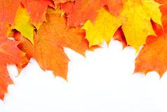 Maple leaves frame Royalty Free Stock Photo