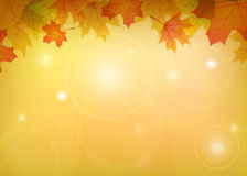 Maple leaves frame. Autumn maple leaves frame with place for text Royalty Free Stock Photos