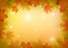 Maple leaves frame. Autumn maple leaves frame with place for text Royalty Free Stock Photo