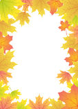 Maple leaves frame. Autumn maple leaves frame with place for text Stock Photos