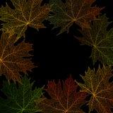 Maple leaves frame Stock Photo