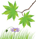 Maple leaves, grass and a flower Stock Photo