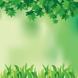 Maple Leaves and Grass Stock Photo