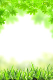 Maple leaves and green grass Stock Photo