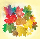 Maple  leaves grunge. Maple autumn falling leaves background Royalty Free Illustration