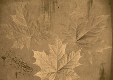 Maple leaves on grunge background Royalty Free Stock Image