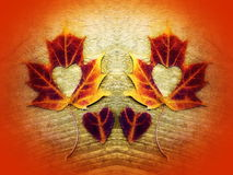 Maple leaves and hearts Stock Photos