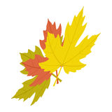Maple leaves icon, isometric 3d style. Maple leaves icon in isometric 3d style on a white background Royalty Free Stock Photo